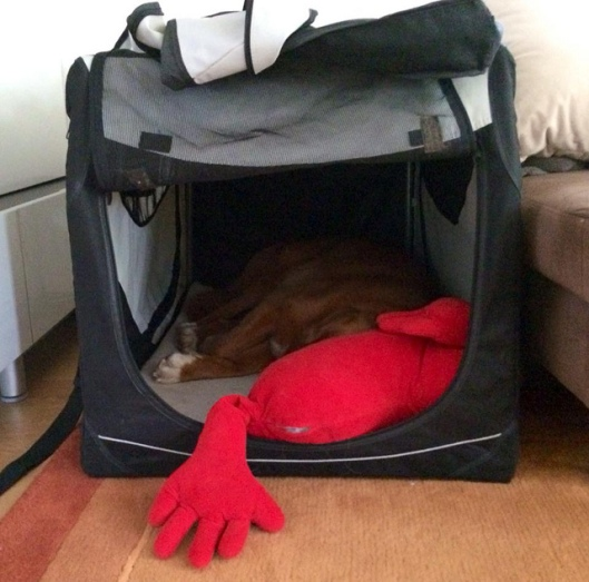Elmo_Kennel